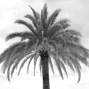 French Photographer Nature Photography Vegetal / Palm tree