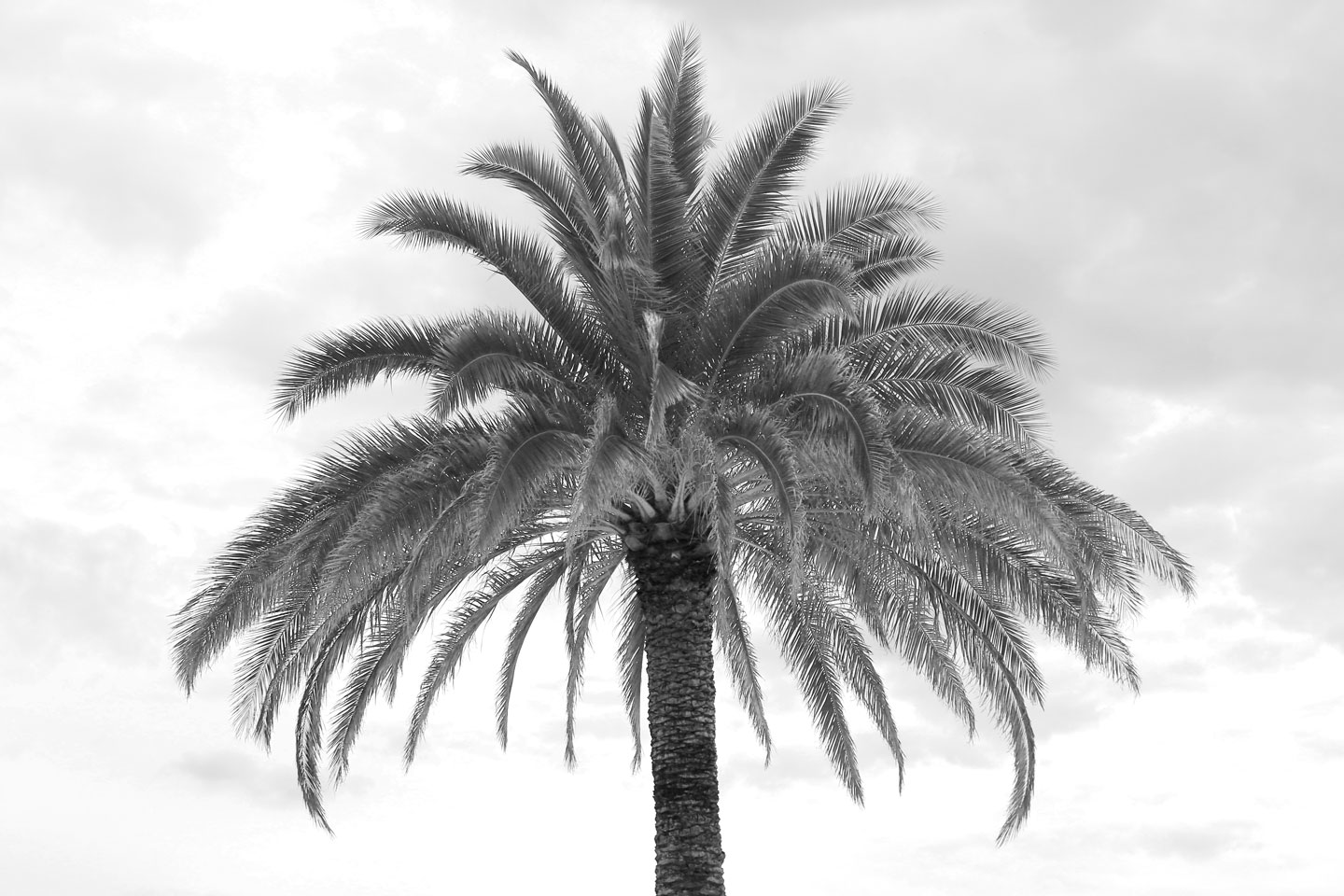 French Photographer Landscape Photography Palm