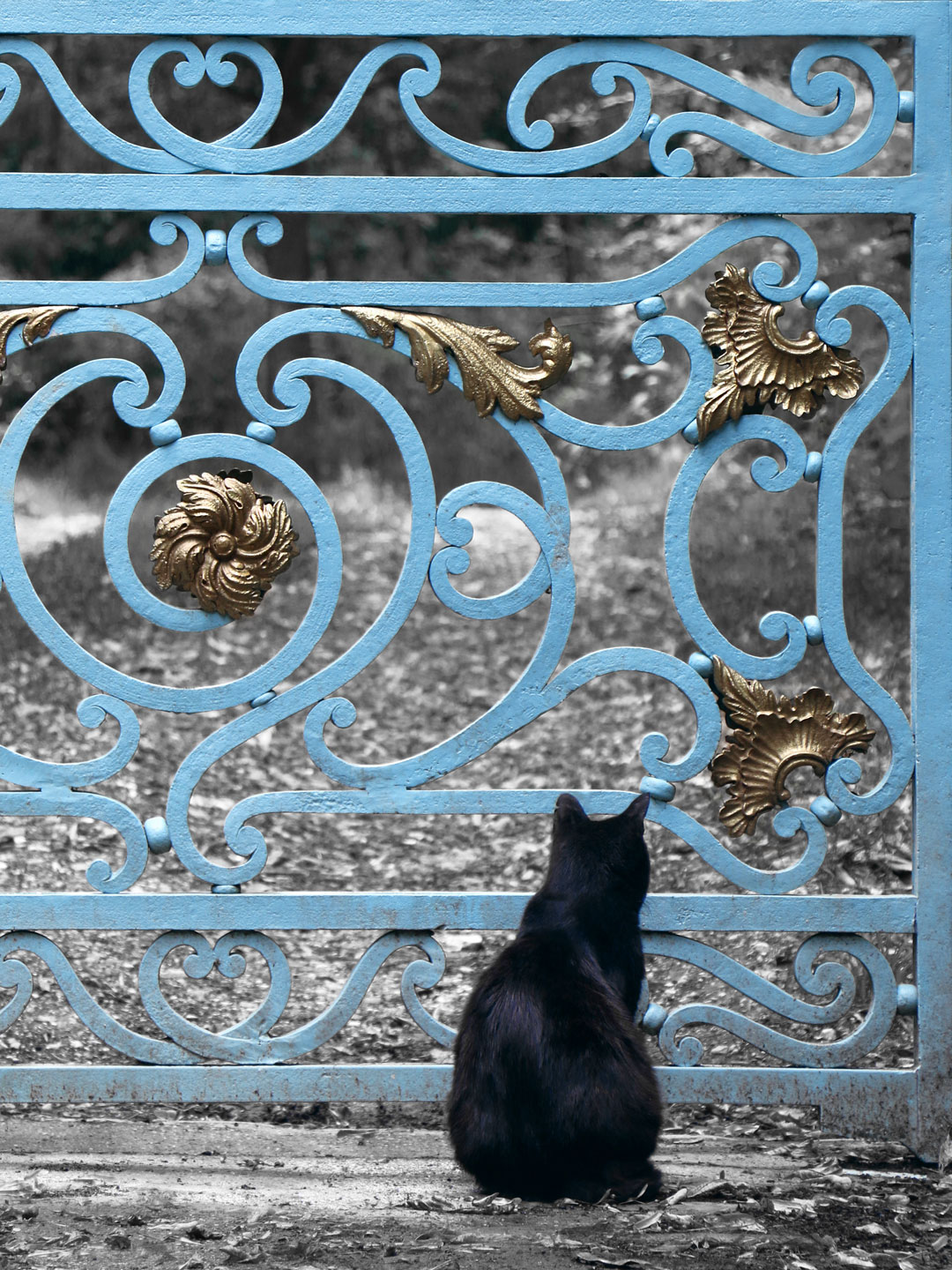 French Photographer Art Photography The Cat & the Gate
