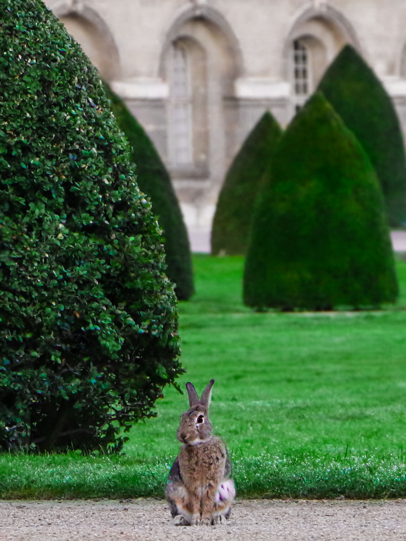 French Photographer Art Photography Rabbit in the Garden