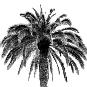 French Photographer Nature Photography Palm tree