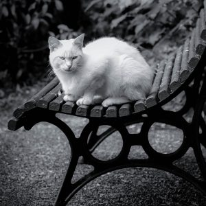 French Photographer Nature Photography White Cat in the Garden