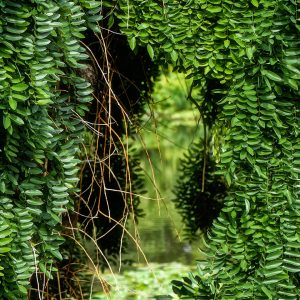 French Photographer Nature Photography Secret Garden