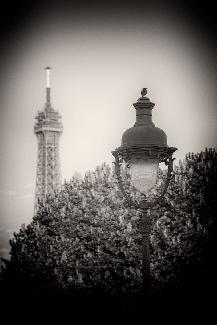 French Photographer Street Photography Bird on street lamp and the Eiffel tower